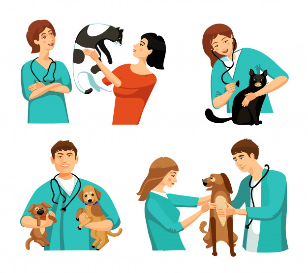 veterinary medicine career
